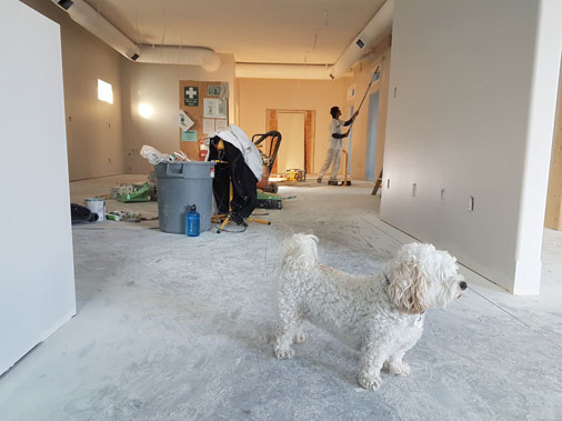 Home renovation with white dog looking outside